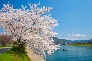 桜萩八景遊覧船の写真素材 [FYI02739486]