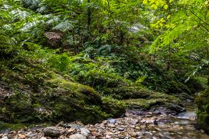 沖縄県 やんばるの写真素材 [FYI02739499]
