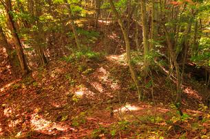 女神岳城跡の堀切の写真素材 [FYI02739537]