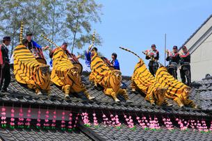 初午まつり 火伏せの虎舞の写真素材 [FYI02739542]