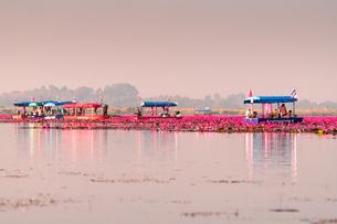 タイ タレーブアデーンの写真素材 [FYI02739609]