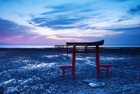 大魚神社の海中鳥居の朝の写真素材 [FYI02739657]