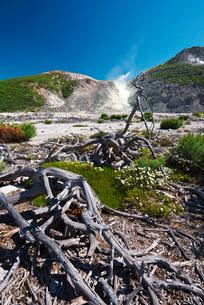硫黄山とエゾイソツツジの写真素材 [FYI02739739]