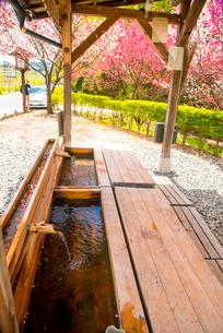 阿智村昼神温泉郷 ハナモモと足湯あひるの湯の写真素材 [FYI02739765]
