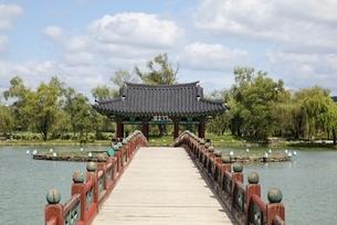 island with pavilion, bridge, Gungnamji Pond, Buyeo, Koreaの写真素材 [FYI02739806]