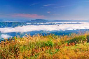 塩塚高原のススキと雲海と雲辺寺山などの山並みの写真素材 [FYI02739868]