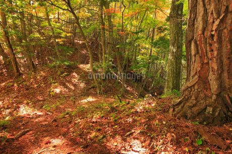 女神岳城跡の堀切の写真素材 [FYI02739880]