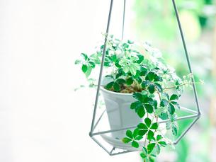 観葉植物の写真素材 [FYI02739892]