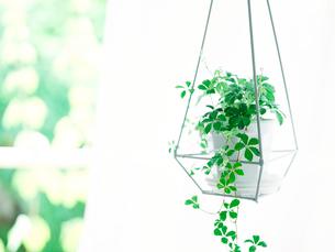 観葉植物の写真素材 [FYI02739928]