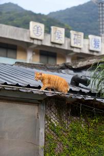 台湾、猫村、ホウトン駅とネコの写真素材 [FYI02739939]