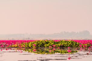 タイ タレーブアデーンの写真素材 [FYI02740006]