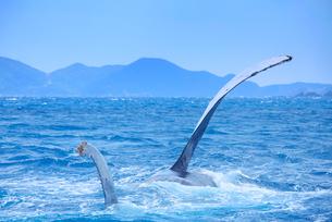 ザトウクジラのペックスラップと渡嘉敷島の写真素材 [FYI02740087]