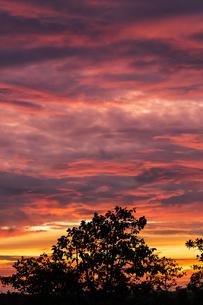 タイ 鮮やかな夕焼けの写真素材 [FYI02740127]