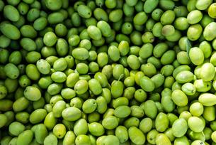 沢山の緑色のオリーブの実の写真素材 [FYI02740418]