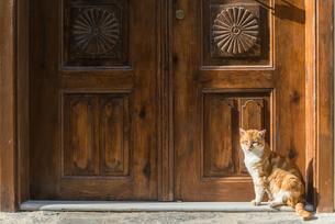 重厚な扉の前に座るネコの写真素材 [FYI02740424]