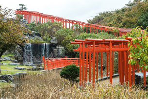 トンネル状に赤い鳥居が立ち並ぶ高山稲荷神社風景の写真素材 [FYI02740437]