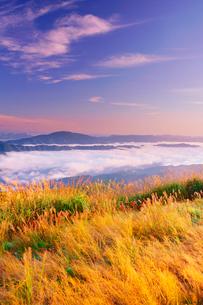 朝日を浴びる塩塚高原のススキと雲海と雲辺寺山などの山並みの写真素材 [FYI02740455]