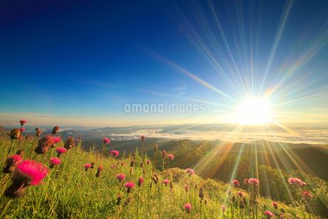 ノアザミと上田方向の雲海と朝日の光芒の写真素材 [FYI02740506]