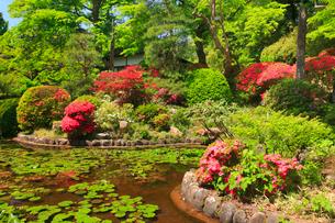 大輪寺のツツジと庭園の写真素材 [FYI02740586]