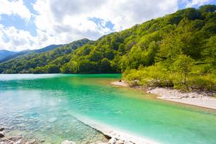 白山国立公園,白水湖とブナの森の写真素材 [FYI02740661]
