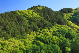 松尾古城跡の写真素材 [FYI02740747]