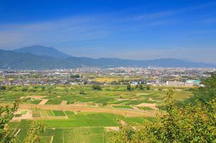 妻女山展望台から望む川中島古戦場と飯縄山の写真素材 [FYI02740833]