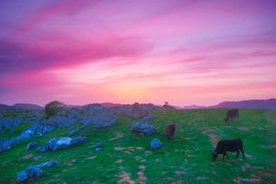 姫鶴平の石灰岩群と黒毛和牛と夕焼けと雨霧山方向の山並みの写真素材 [FYI02740863]