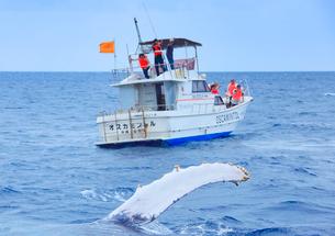 ザトウクジラのペックスラップとホエールウォッチング船の写真素材 [FYI02740945]