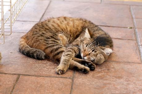 チャンギビレッジモール街の店頭で眠るキジ柄のネコの写真素材 [FYI02740970]