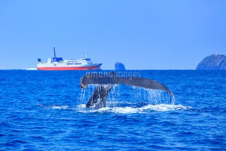ザトウクジラのプルークアップダイブとフェリーざまみとウシジの写真素材 [FYI02741020]