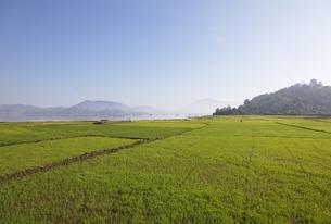 Lak Lake region, rice fields, Central Highlands, Vietnamの写真素材 [FYI02741097]