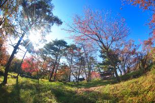 陣場山城跡の神明宮と木もれ日の写真素材 [FYI02741169]