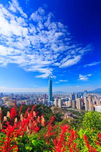台北101などのビル群とベニツツバナと秋空の写真素材 [FYI02741180]