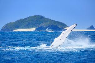 ザトウクジラのペックスラップと嘉比島の写真素材 [FYI02741237]