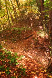 女神岳城跡の堀切の写真素材 [FYI02741253]