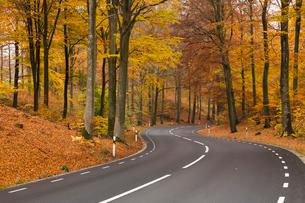 Sweden, Skane, Soderasens National Park, Rostanga, Road in forestの写真素材 [FYI02742150]