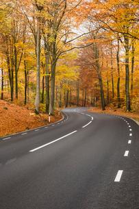 Sweden, Skane, Soderasens National Park, Rostanga, Road in forestの写真素材 [FYI02742185]
