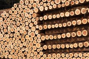 積み上げられた材木の断面の写真素材 [FYI02742949]