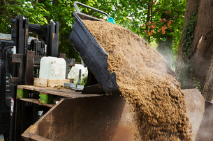 Steaming spent grain being poured into a large container outside a brewery.の写真素材 [FYI02744675]