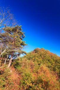 千古屋城跡から望む根古屋城跡の写真素材 [FYI02749083]