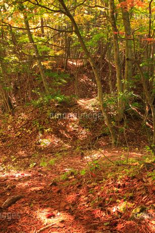 女神岳城跡の堀切の写真素材 [FYI02749119]