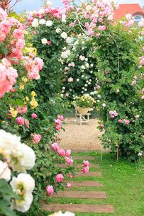 満開のバラのアーチの写真素材 [FYI02750375]