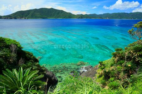 奄美大島 屋鈍付近から望む焼内湾の写真素材 [FYI02750522]