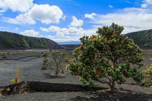 ハワイ島のキラウエアイキトレイルの写真素材 [FYI02753596]
