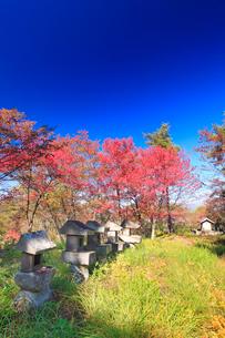 紅葉の陣場山城跡の神明宮の写真素材 [FYI02754644]