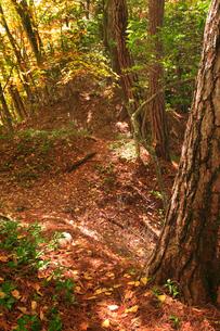 女神岳城跡の堀切の写真素材 [FYI02756021]