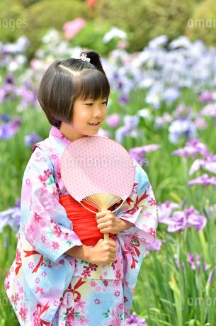 浴衣の女の子(初夏、菖蒲)の写真素材 [FYI02770742]