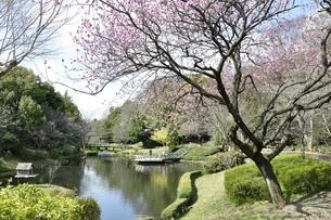 春爛漫の公園の写真素材 [FYI02810001]