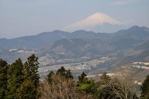 菜の花台より富士山の写真素材 [FYI02810029]