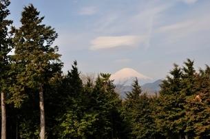 菜の花台より富士山の写真素材 [FYI02810037]